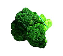 Broccoli Regular