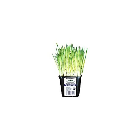 Wheat Grass Organic Prepacked - Each
