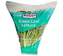 Green Leaf Lettuce - Each