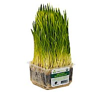 Wheat Grass Organic - Each