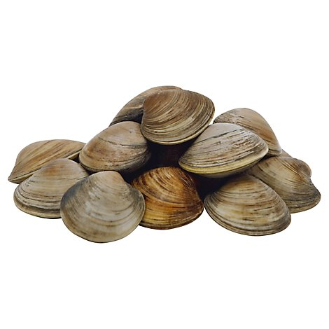 Seafood Service Counter Clam Littleneck New Zealand Live - 1.50 Lbs.
