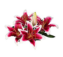 Lily Stargazer 3 Count - colors may vary