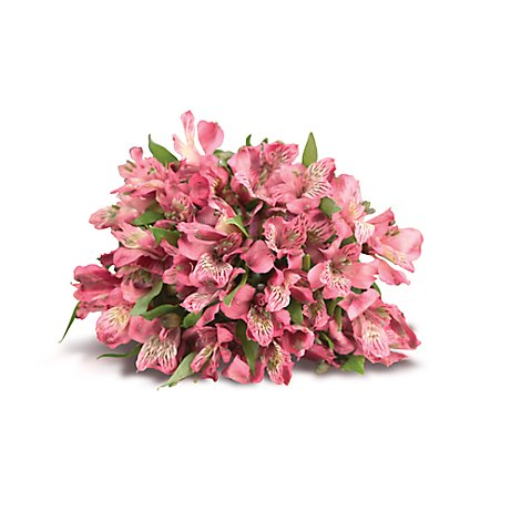 Alstroemeria - 3 Count Colors May Vary