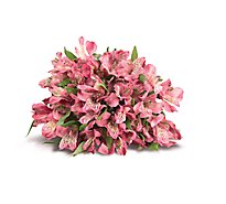 Alstroemeria - 9 Count Colors May Vary