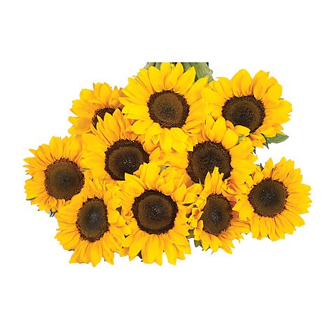 Tinted Sunflower - 5 Count