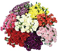 Carnations Mini 1 Bunch - colors may vary