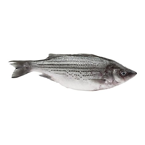 Seafood Counter Fish Bass Striped Whole Dressed Fresh - 1.50 LB
