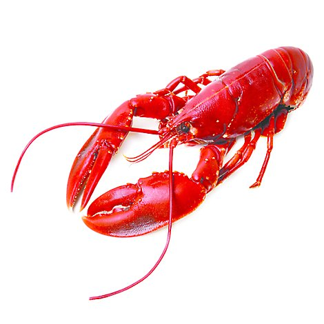 Seafood Service Counter Whole Lobster Cooked 16 Oz Previously Frozen 1 Count - Each