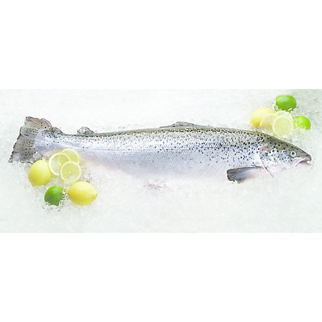 Seafood Counter Fish Salmon Atlantic Whole Head On Fresh - 1.00 LB
