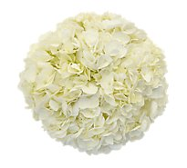 Debi Lilly Hydrangea 3 Stem - colors may vary