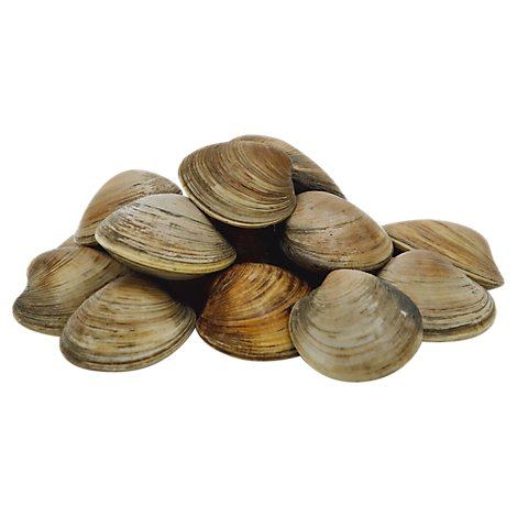 Seafood Service Counter Clams Littleneck Live - 1.50 Lbs.