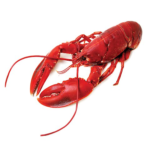 Seafood Counter Whole Cooked Lobster 12 To 14 Ounce - 1.00 LB