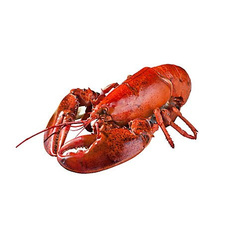 Seafood Service Counter Whole Cooked Lobster 12 Oz Each