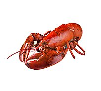 Seafood Service Counter Whole Lobster Cooked 12 Oz 1 Count - Each