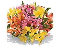 Alstroemeria 8 Stem - Bunch