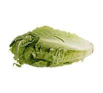 Lettuce Romaine Red Organic