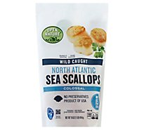 Open Nature Sea Scallops North Atlantic Wild Caught Colossal Under 15 Count - 16 Oz