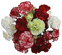 Carnations 10 Stem - Bunch