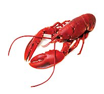 Lobster Whole Cooked 12 Ounce Previously Fz