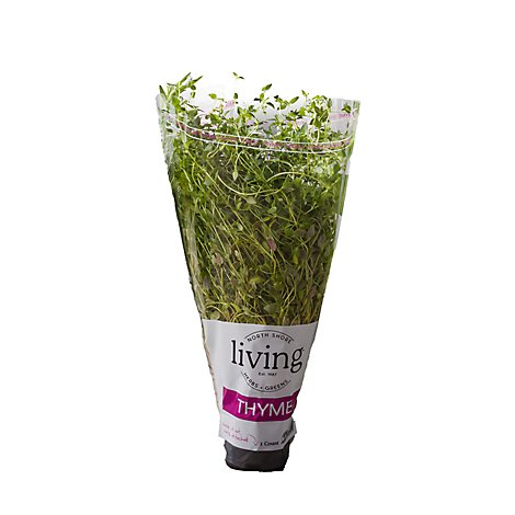 North Shore Living Potted Thyme - Each